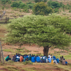 People sitting under a tree